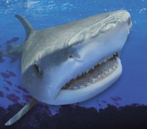 Rekin finansowy
